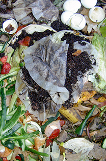 Composted vegetable scraps, eggshells, coffee grounds and more