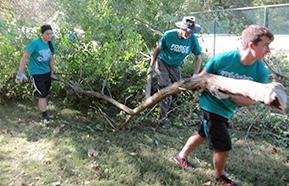 Volunteers remove bush honeysuckle