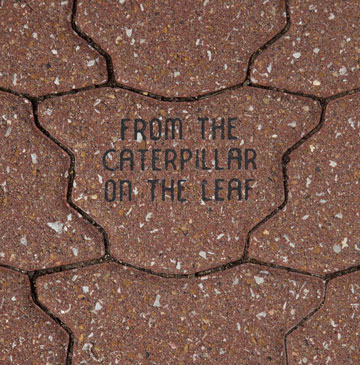 sample butterfly paver with text