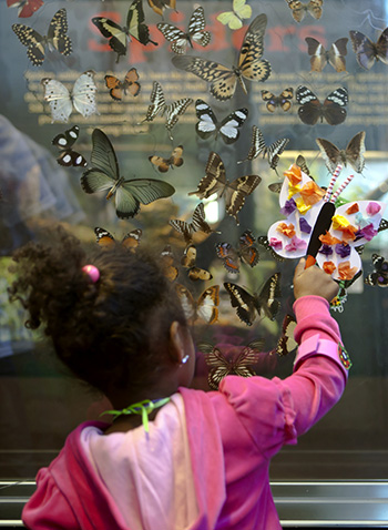 Young visitor explores butterflies of the world