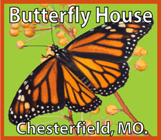 Butterfly House patch program