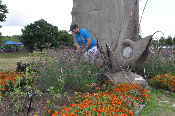 Horticulturist trimming wildflowers in butterfly garden