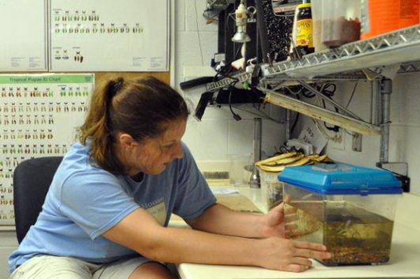 Woman working in the entomology lab