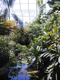 Inside the tropical conservatory