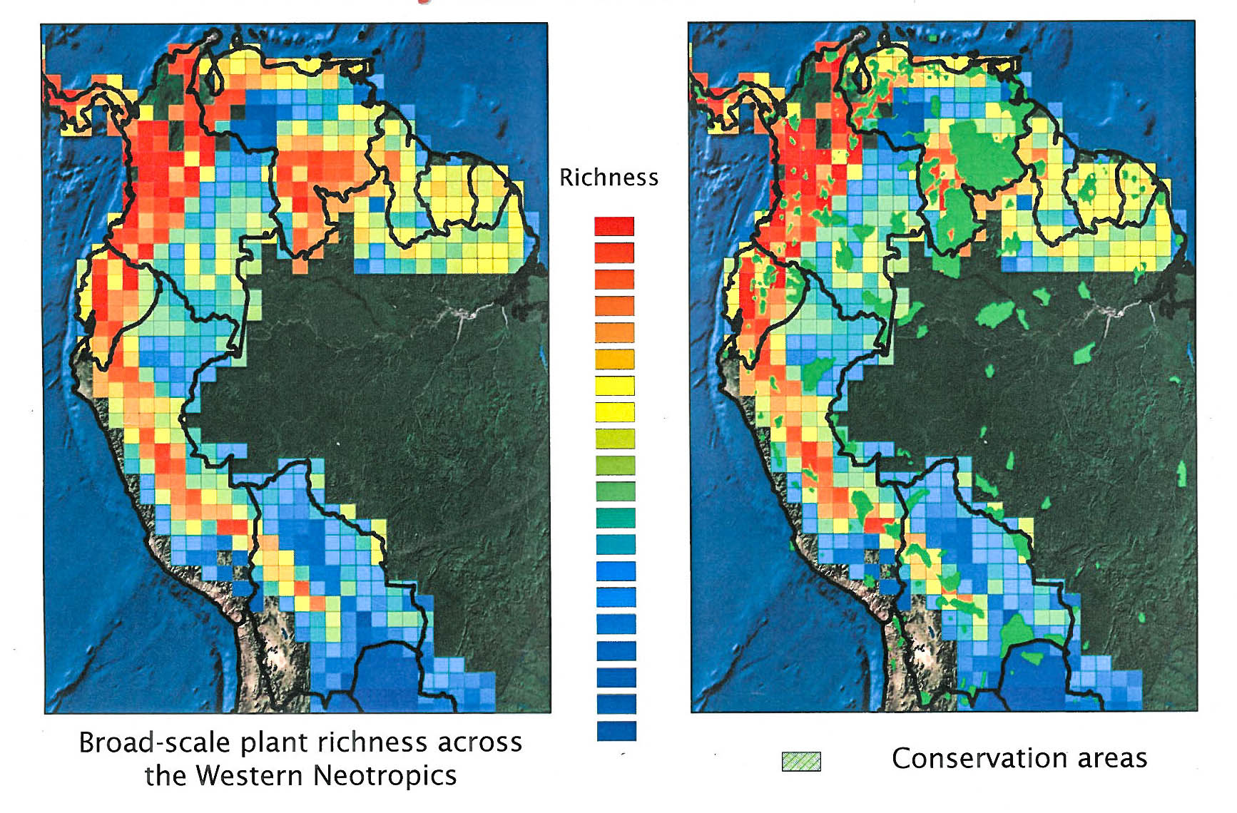 Plant Diversity and Distributions