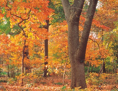 Member Speaker Series Autumn Gardening Missouri Botanical Garden