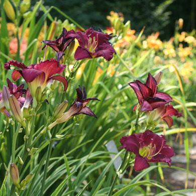 Membership Sale Missouri Botanical Garden