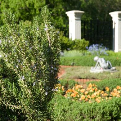 Members Day Harvesting Herbs For Dinner Missouri Botanical Garden