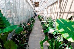 Walkway in greenhouse