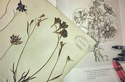 Botanical illustrations and crayons