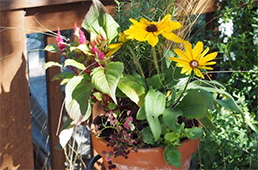 Fall flowers in container