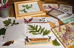 Plant press and pressed plants