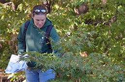 Instructor demonstrating pruning technique