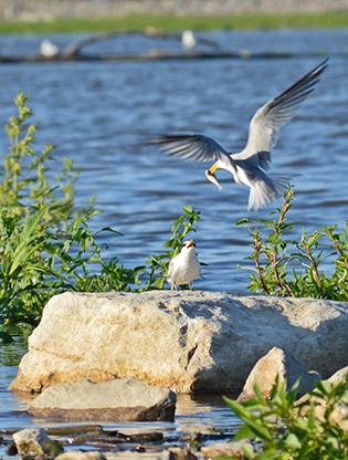 Birds along the river
