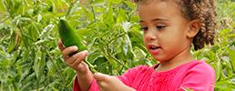Girl picking vegetable