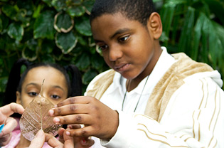 Boy and girl examining leaf skeleton