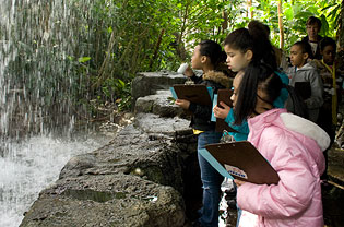 Students stand under the waterfall in the Climatron