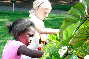 Students explore leaf shape