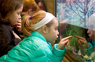Girls looking into aquarium