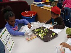 Kids investigating broccoli