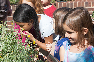 Students smelling herbs in the scented garden