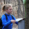 Student collecting maple syrup
