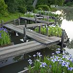 Zigzag bridge in Japanese Garden