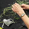 Hands making sachet of dried plants