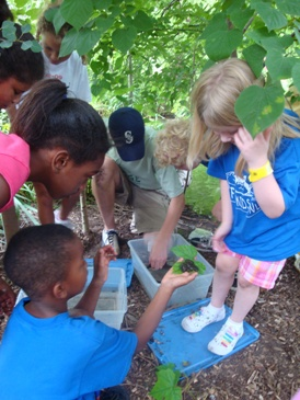 Children expore wetland plants