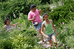 Three girls wander a garden