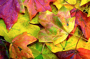 Colorful leaves on ground