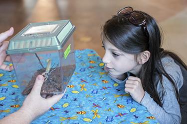 Girl observing praying mantis