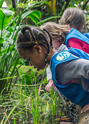 Daisies discover how rice grows