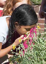 Girl smelling flowering herbs