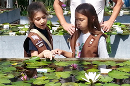 Brownies in waterlily greenhouse