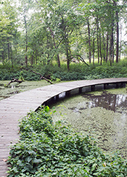 Boardwalk in wetlands at Shaw Nature Reserve