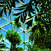 Plants inside Climatron