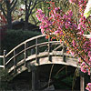 Drum bridge in Japanese Garden