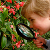 Boy using magnifying lens to view flowers