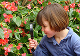 Girl examining begonias through magnifier