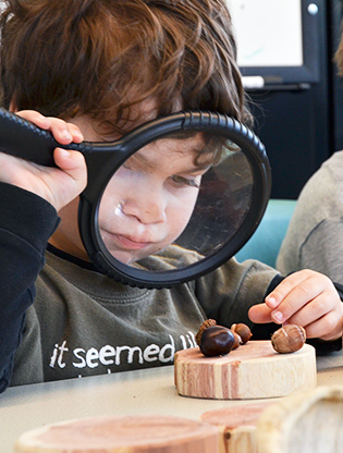 Child looking at acorns and seeds through magnifier