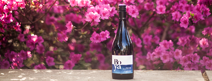 Wine bottle in front of blooming pink azaleas