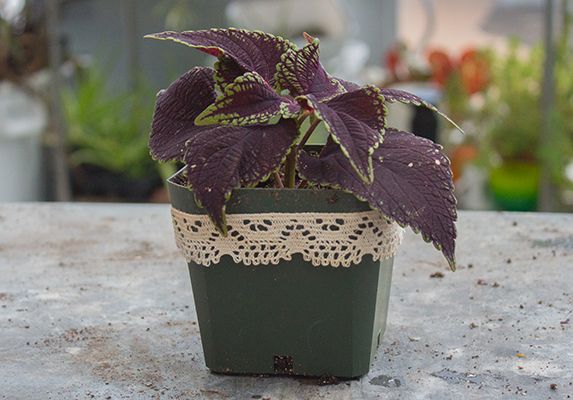 plant cuttings as gifts