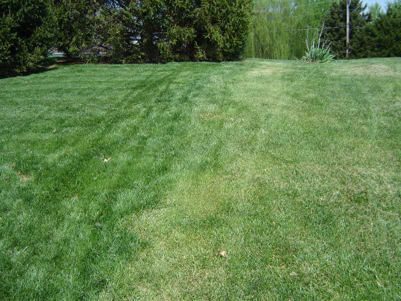 Lawn Problems Cool Season Grasses