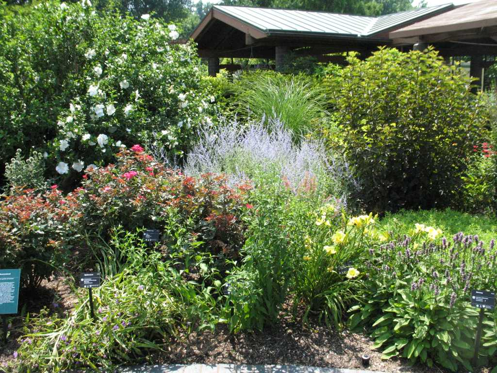 Landscaping for Garden design plants