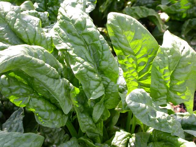 Common Garden Plants vegetable gardening