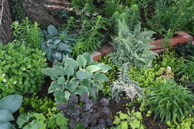 These Perennials ...