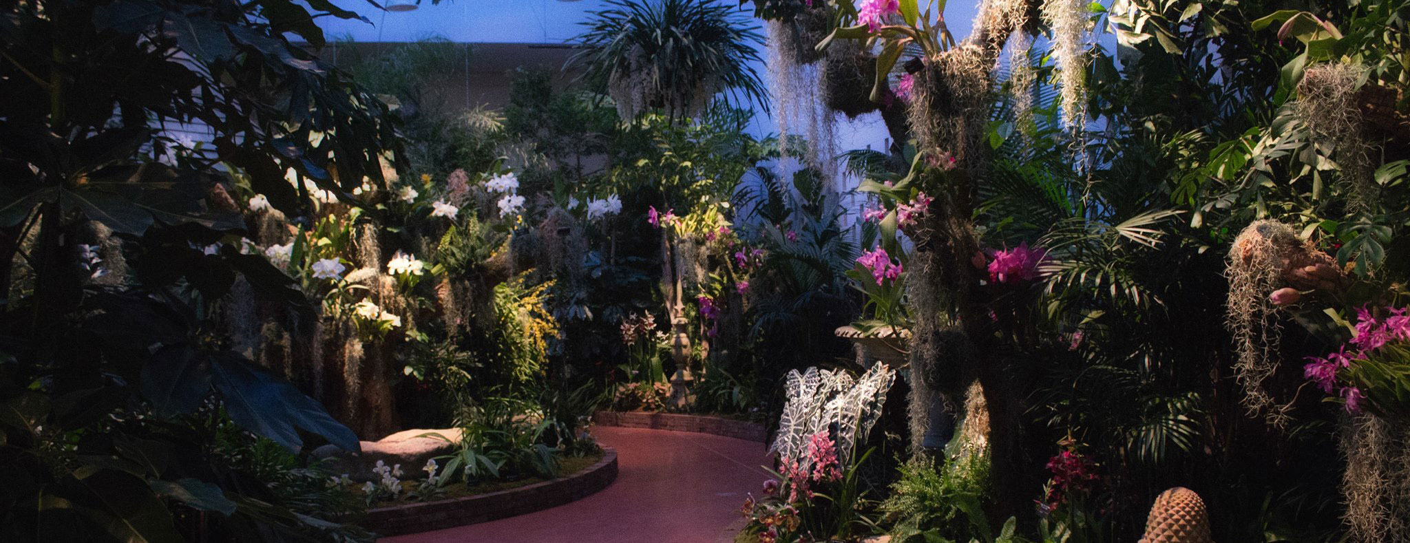 Orchid Show at night