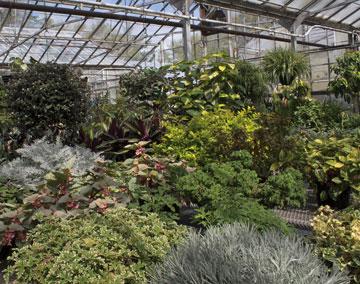 Member Speaker Series Best New Plants For The Home Landscape Missouri Botanical Garden