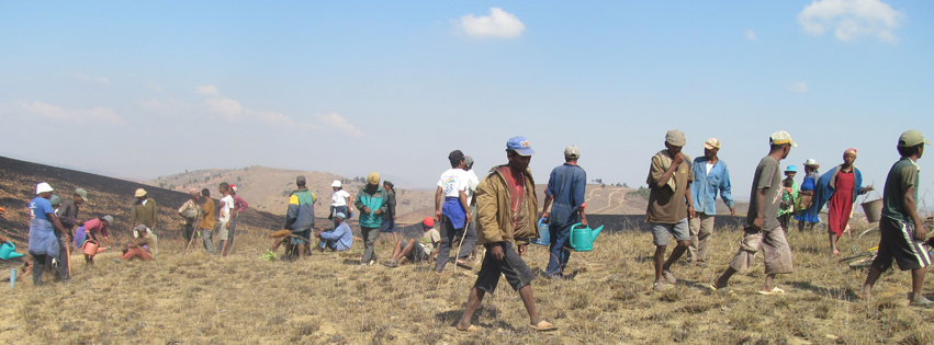 Giving tuesday fighting for the forest in madagascar